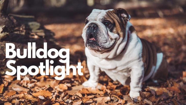 Bulldog Spotlight